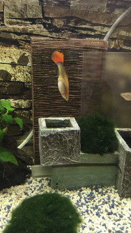 Normal!? - (Wasser, Fische, Aquarium)