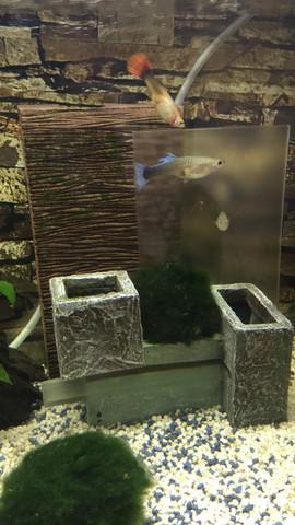 Komisch - (Wasser, Fische, Aquarium)