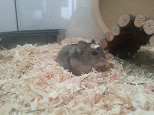 mein hamster bei t und frisst nicht aus der hand freizeit tiere haustiere. Black Bedroom Furniture Sets. Home Design Ideas