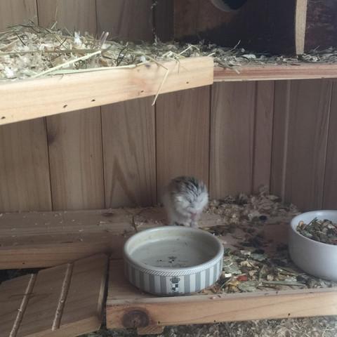 Das ist der Hamster  - (krank, Hamster, Lautesamten)