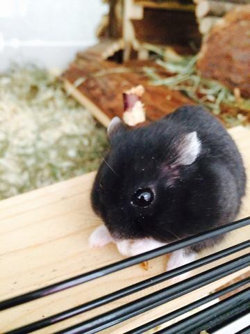 Mein Hamster zittert,humpelt und wirkt ein bisschen hektisch was tun?