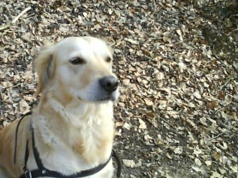 Kimba mein Hund - (Tiere, Angst, Hund)