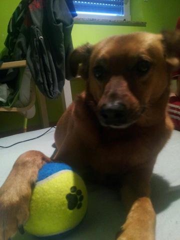 Das ist mein kleiner Schatz ! :) - (Angst, Hund, Wasser)