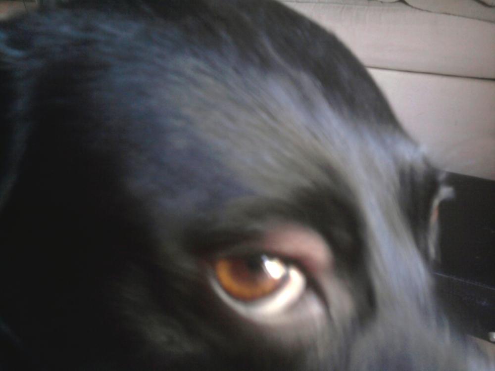 mein hund hat schwellung am auge kann jemand helfen krankheit. Black Bedroom Furniture Sets. Home Design Ideas
