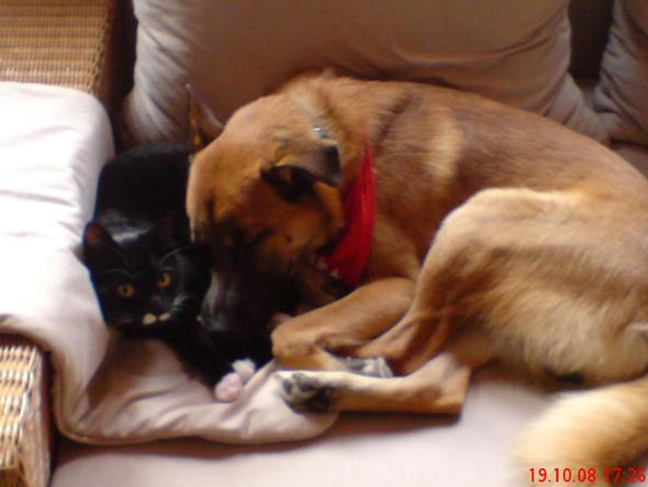 Mit Katzen hat er auch kein Problem..  - (Tiere, Hund)