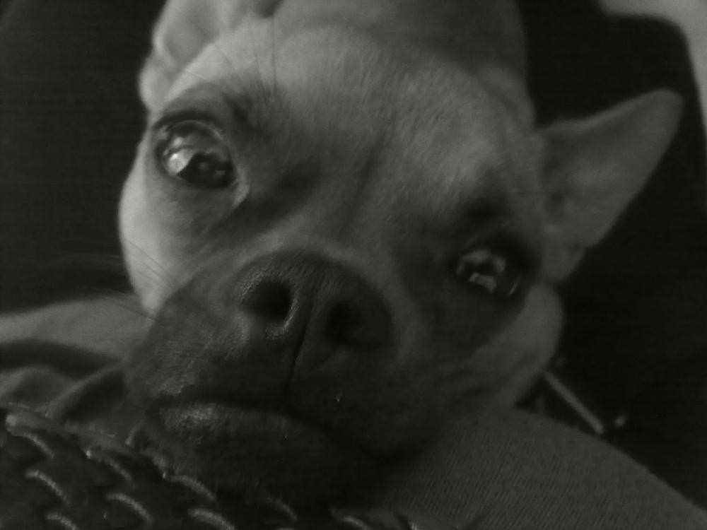 mein hund pinkelt in die wohnung was kann ich machen tiere erziehung. Black Bedroom Furniture Sets. Home Design Ideas