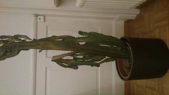 Mein Kaktus hat braune Flecken und ist am sterben. Was kann ich dagegen tun?