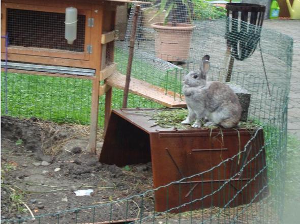 (: - (Tiere, Haustiere, Kaninchen)