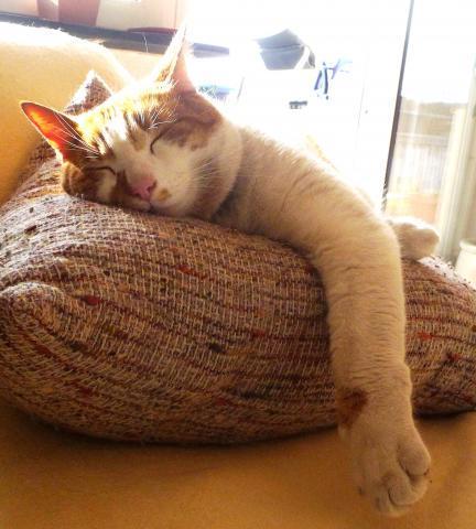 chester, der vielfraß - (Katze, Futter)