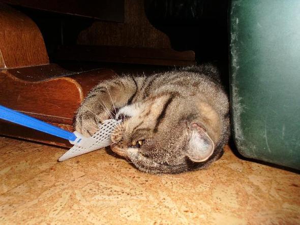 Katze - (Katze, Haustiere, Streicheln)