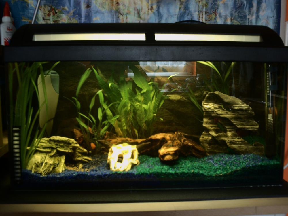 mein sohn hat ein 54 liter aquarium siehe bild frage. Black Bedroom Furniture Sets. Home Design Ideas