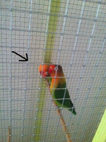 180° - (Vögel, Kopf, verdreht)