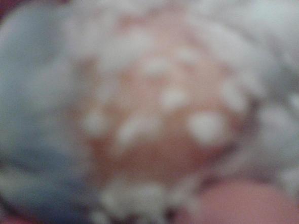 Tumor - (Tiere, Tod, Vögel)