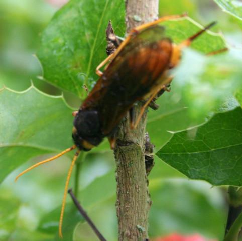 unbekanntes Insekt - (Insekten, unbekannt)