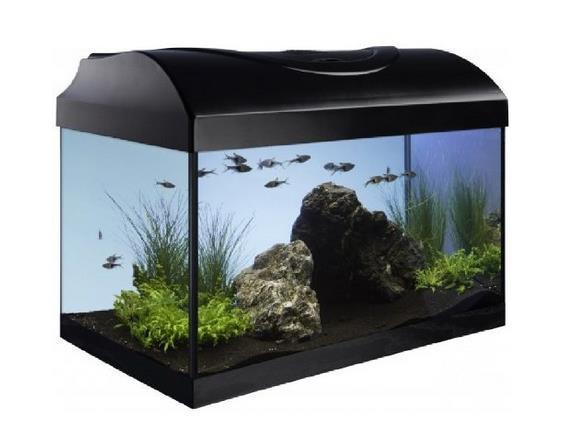Becken - (kaputt, Aquarium, Alternative)
