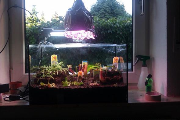 meine carnivoren habe ich die richtige beleuchtung licht terrarium karnivoren. Black Bedroom Furniture Sets. Home Design Ideas