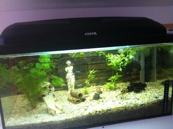 60 Liter Aquarium - (Krankheit, Wasser, Fische)