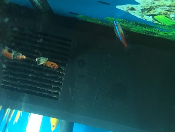 meine fische im auquarium schwimmen oben am filter paar liegen am boden leben aber noch. Black Bedroom Furniture Sets. Home Design Ideas