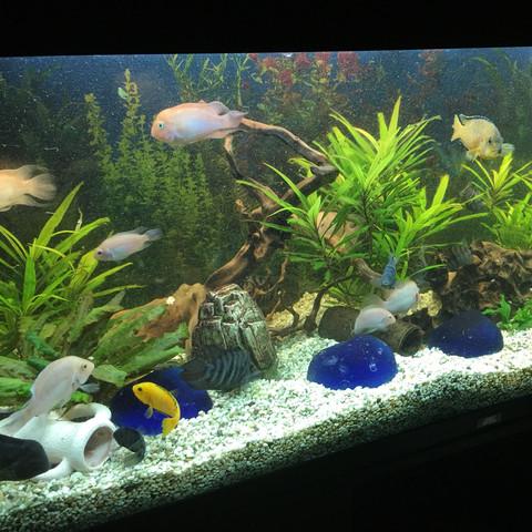 Meine fische vergraben und graben pflanzen ein was tun for Aquarium fische arten