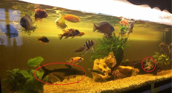 Meine frau kaufte aquarium mit besatz bei ebay 2 der for Aquarium fische im teich