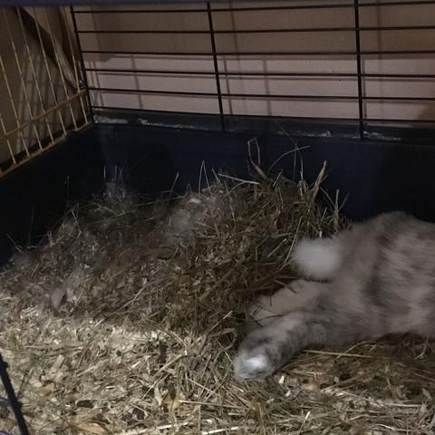 Da hatte sie gestern ihr Nest gebaut. - (Haustiere, Kaninchen, Hasen)