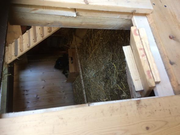 Meine Hühner gehen nicht aus ihrem Hühnerstall, was soll ich tun?
