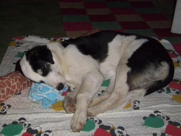 Schlafen ist ihre Lieblingsbeschaeftigung - (Hund, Hund bellt nicht)