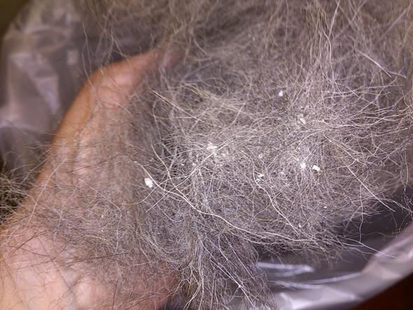 ausgekämmte schuppen - (Haare, Tiere, Hund)