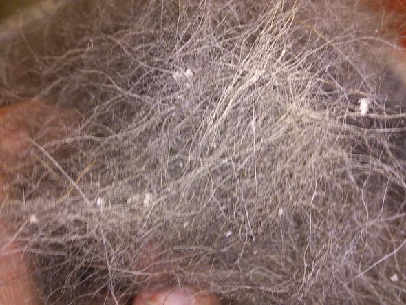 ausgekämmt - (Haare, Tiere, Hund)