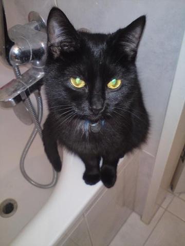 Meine Mandu - (Katze, Katzen, vermisst)
