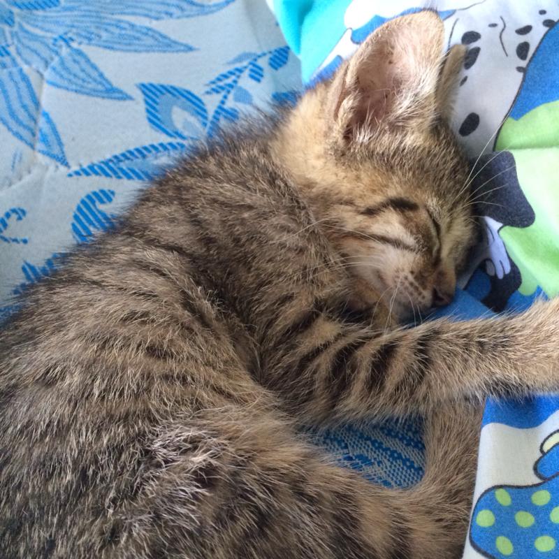 meine katze ist tot was tun liebe tiere katzen. Black Bedroom Furniture Sets. Home Design Ideas