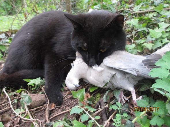 - (Tiere, Katze, KAZE WILDERT IMMER)