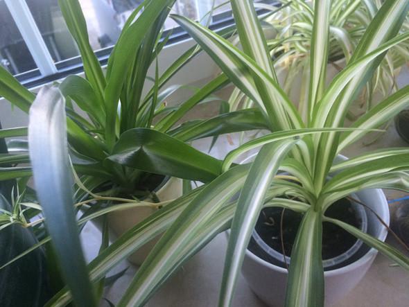 Das sind die Pflanzen  - (Tiere, Katze, Pflanzen)