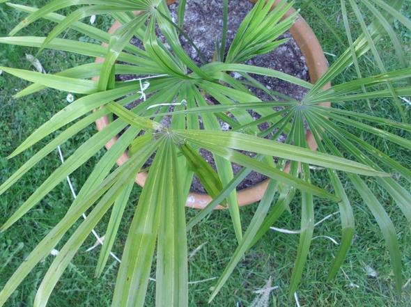 und hier nochmal  - (Pflanzen, Pflege, trocken)