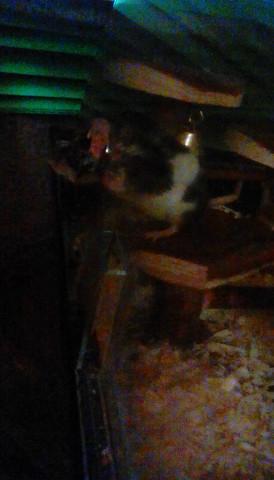 Maus steckt fest  - (Tiere, Haustiere, Maus)