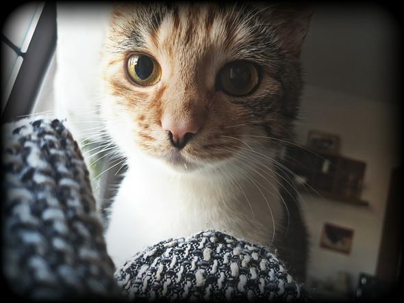 Susi - (Katze, Gefühle)