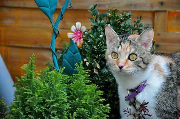 Susi Garten - (Tiere, Kamera, Katze)