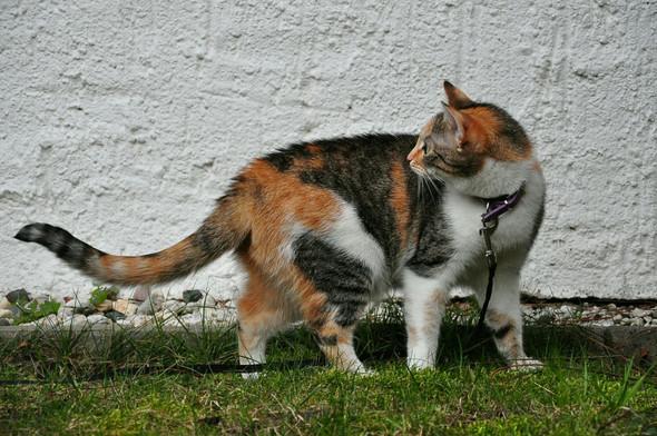Susi - (Tiere, Kamera, Katze)