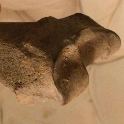 Menschlichen Oberschenkelknochen gefunden? (Medizin, Biologie, Knochen)