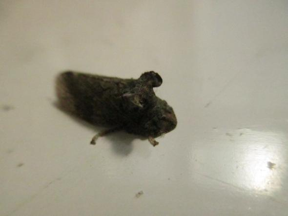 Graues Merkwürdiges Insekt1 - (Tiere, Biologie, Natur)