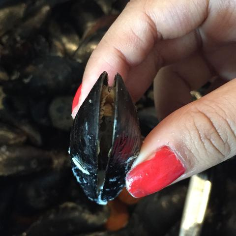 Miesmuschel  - (essen, Muschel)