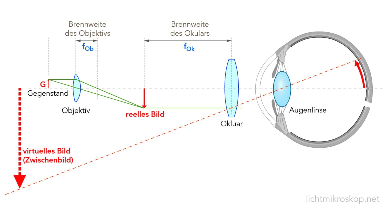 mikroskop strahlengang physik biologie licht. Black Bedroom Furniture Sets. Home Design Ideas