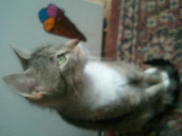 von der seide - (Katzen, Rasen)