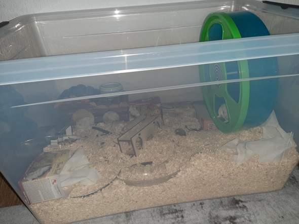 Missverständnis Hamster?