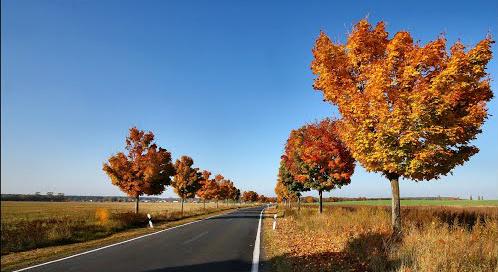 Hier ein Bild der Landstraße - (Führerschein, Punkte, Verkehrsrecht)