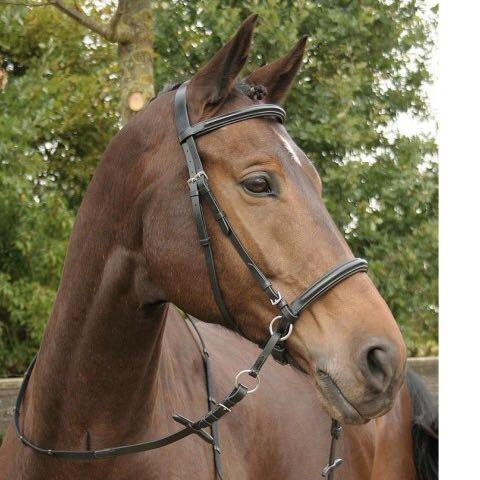 Bild 2 - (Pferde, reiten, Pony)