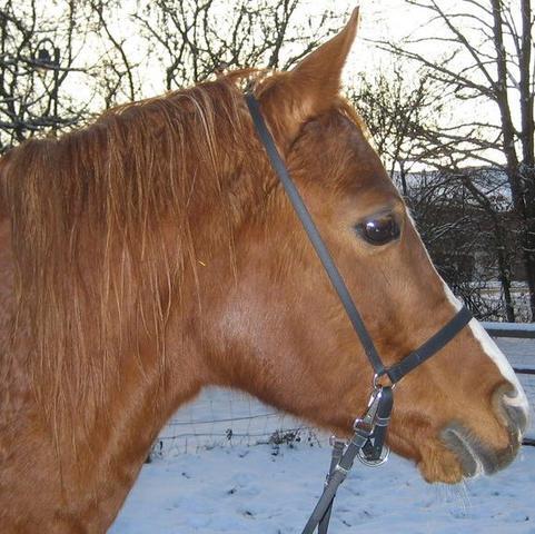 Bild 3  - (Pferde, reiten, Pony)