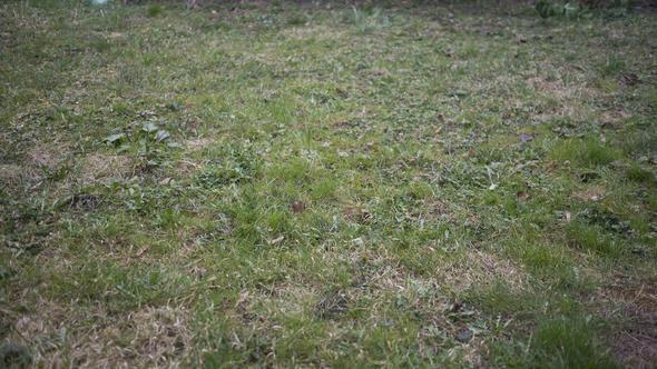 Mit Unkraut überwucherter Rasen, verwildert und vernachlässigt - wie geh ich das an?