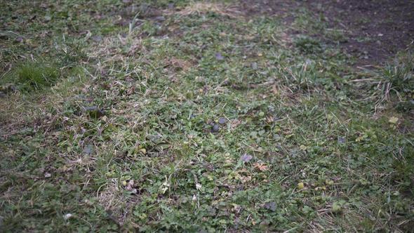 mit unkraut berwucherter rasen verwildert und vernachl ssigt wie geh ich das an garten gras. Black Bedroom Furniture Sets. Home Design Ideas