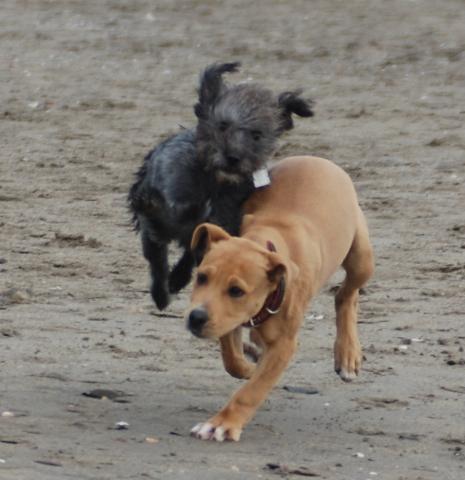 - (Hundefutter, Blähungen, gasproduktion)